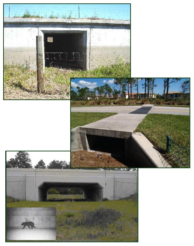Wildlife Crossing Best Management Practices (BMPs)
