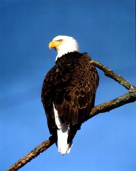 Bald Eagle Memorandum of Agreement